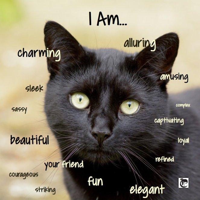 black-cat-appreciation-2015