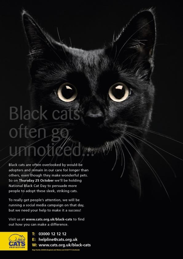 blackcatday