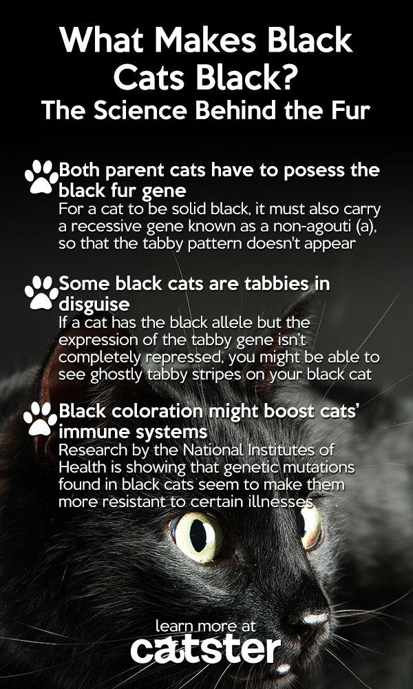 blackcatscience