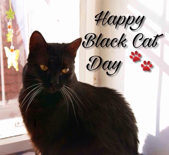 Happy black cat day