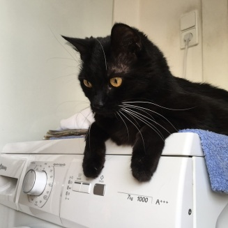 Murli really loves to hang out on the washing machine recently