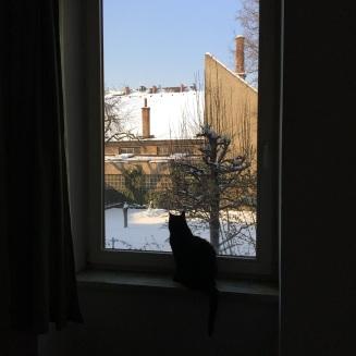 Murli watching the birds from the bedroom window