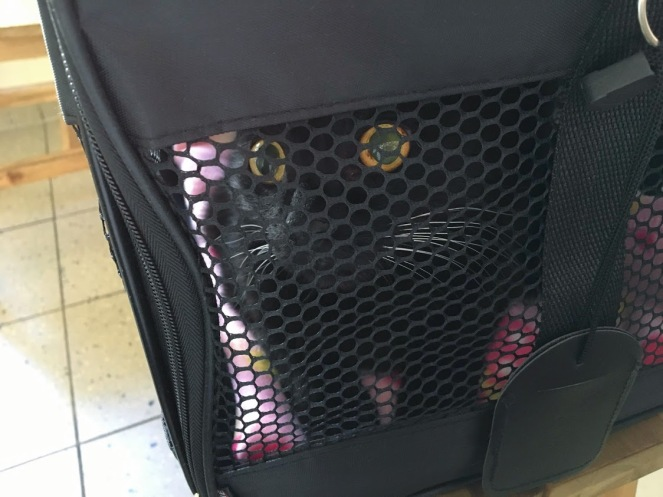 Murli in her carrier
