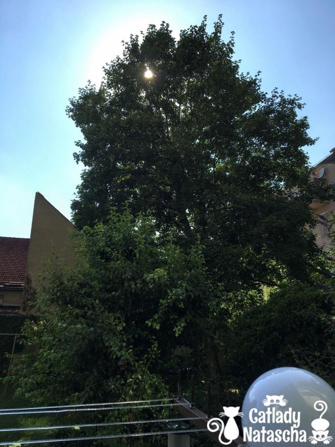 Balcony - Sycamore tree June 29, 2019