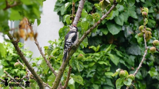 Woodpecker001