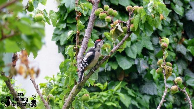 Woodpecker002