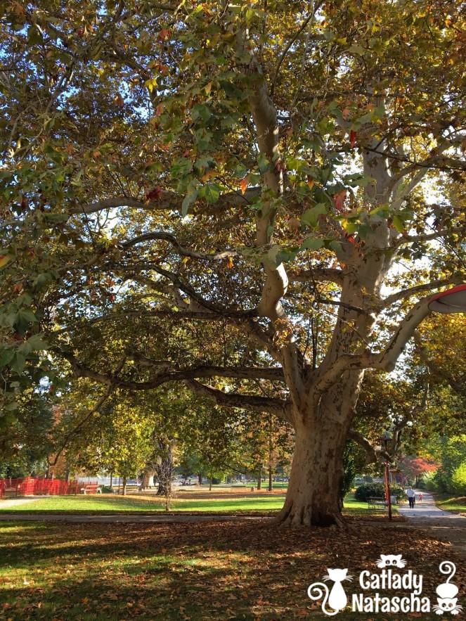 Autumn_Park_02
