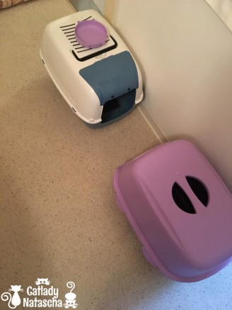2019 11 05 midday 2 new kitty toilets 01