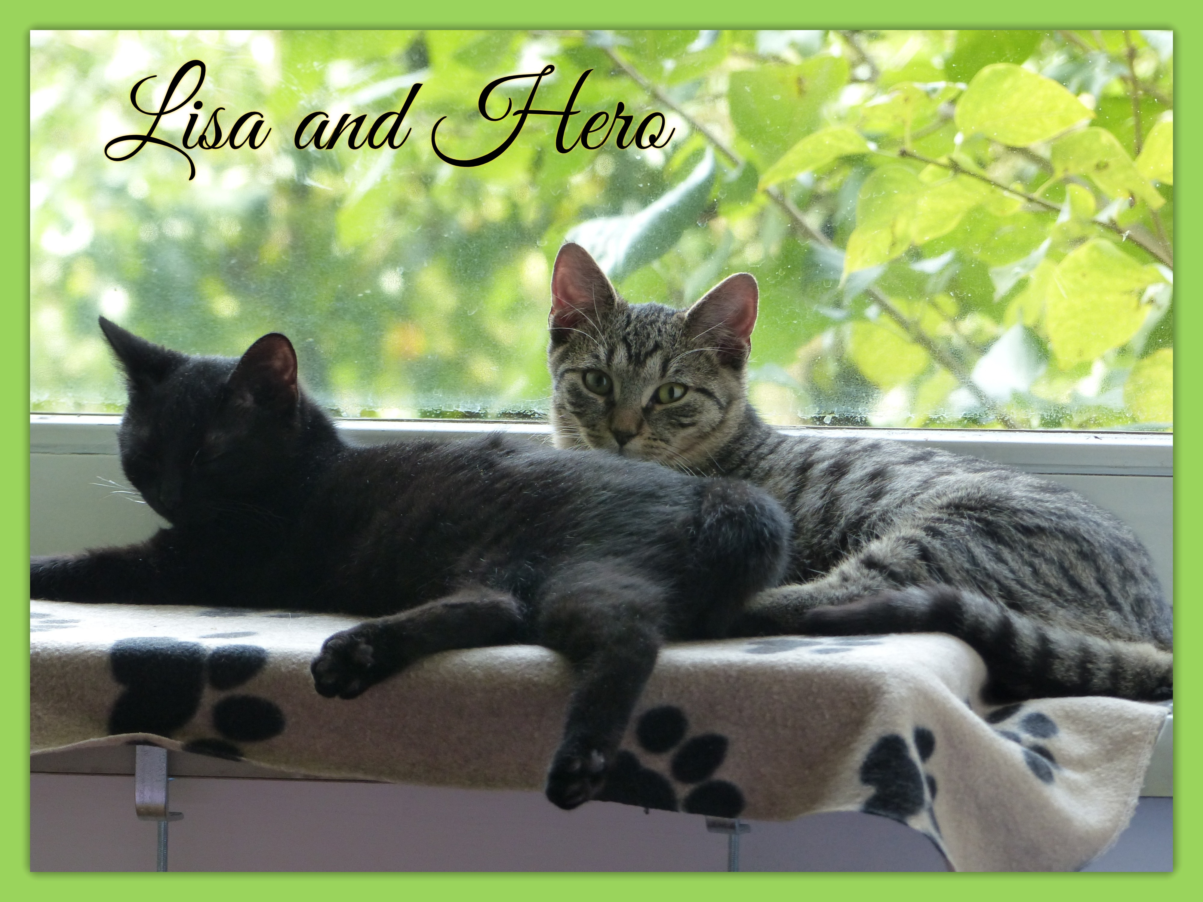 Lisa and Hero about Pic